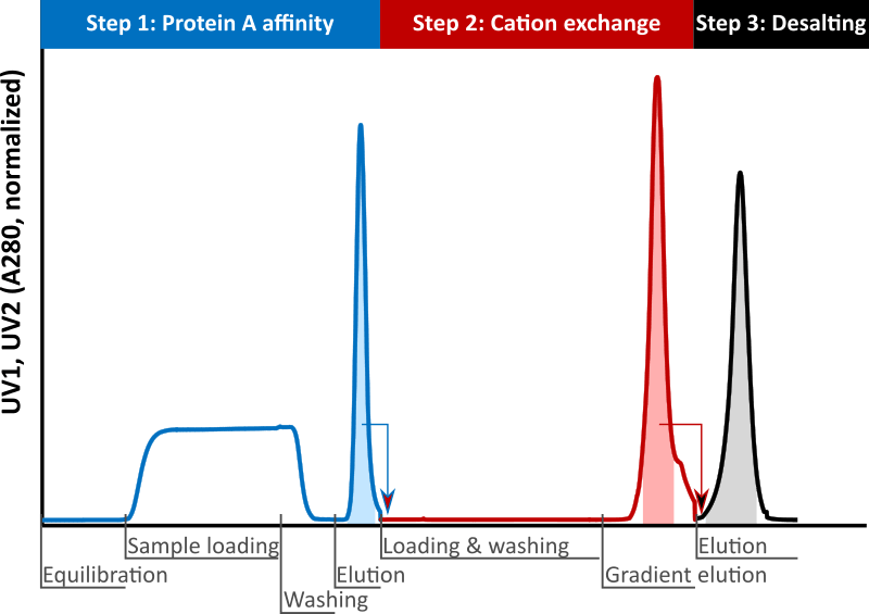 The Contichrom Discovery enables fully automated 3-step purification processes.